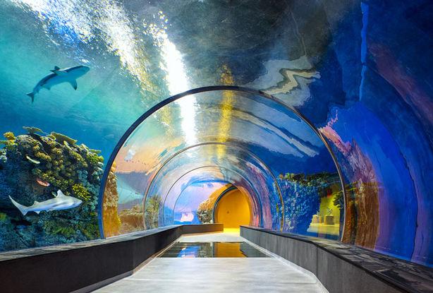 den-blå-planet-Danmarks-Akvarium